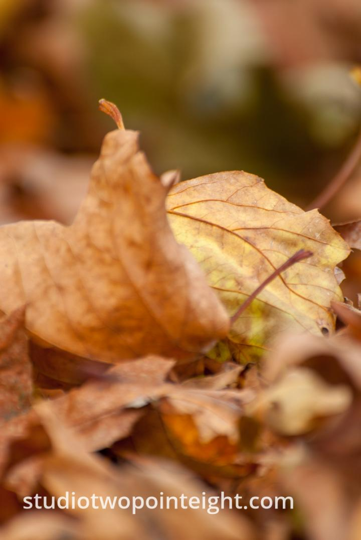 An Autumnal Assay - Multiple Brown Leaves With Bokeh Background