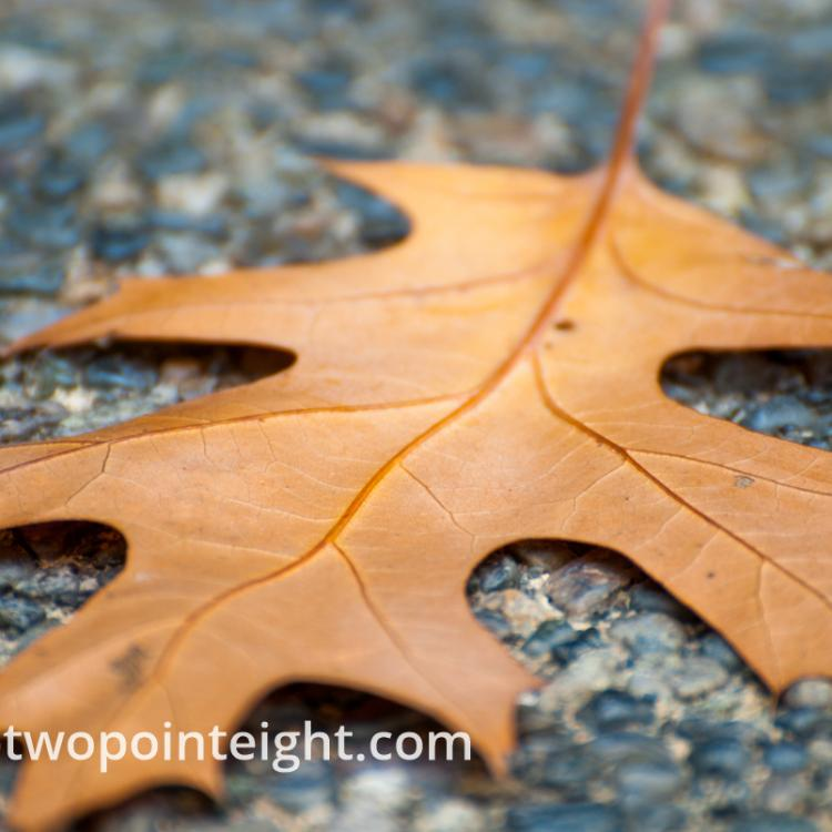 An Autumnal Assay - A Brown Leaf on Blue Gray Pavement